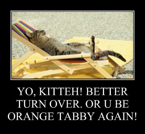 YO, KITTEH! BETTER TURN OVER. OR U BE ORANGE TABBY AGAIN!