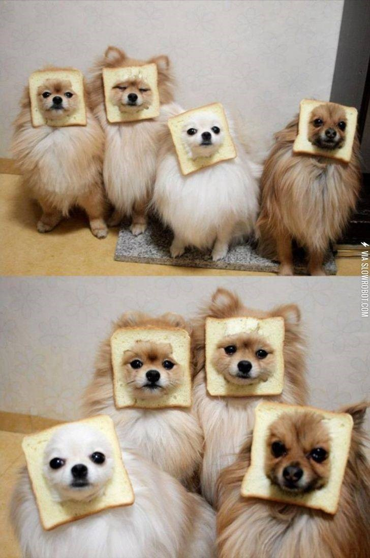 dogs,bread