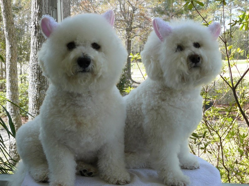 These two little lambs look like dogs