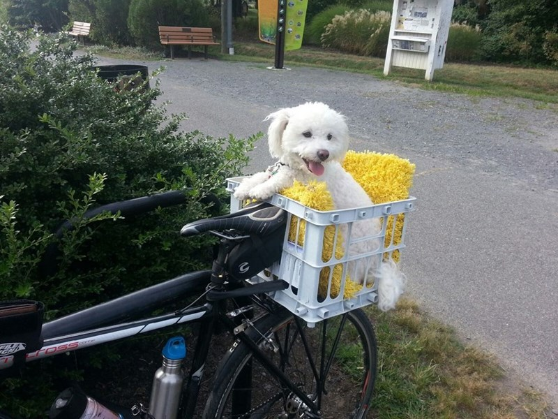 dogs biking - 8818794240
