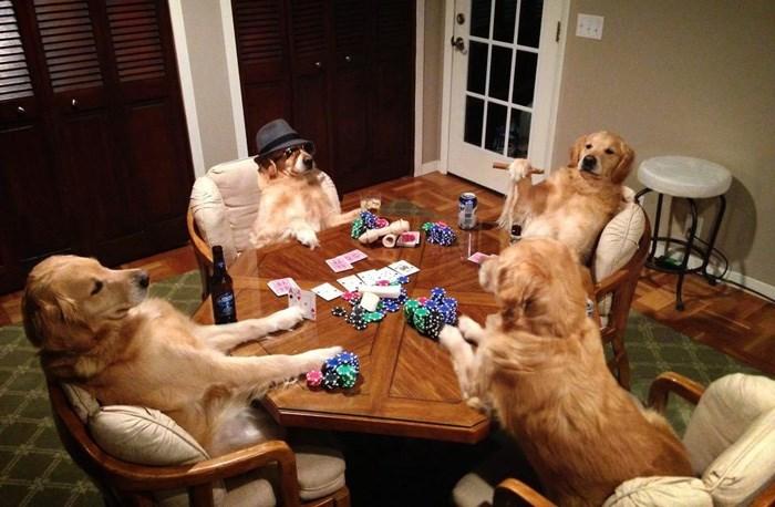 dogs,poker