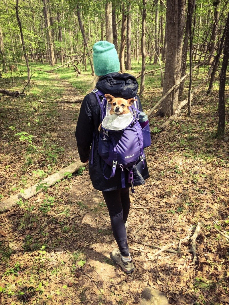 dogs,Hiking