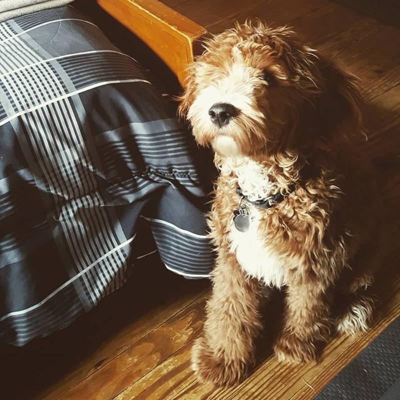 dogs cute - 8818829824