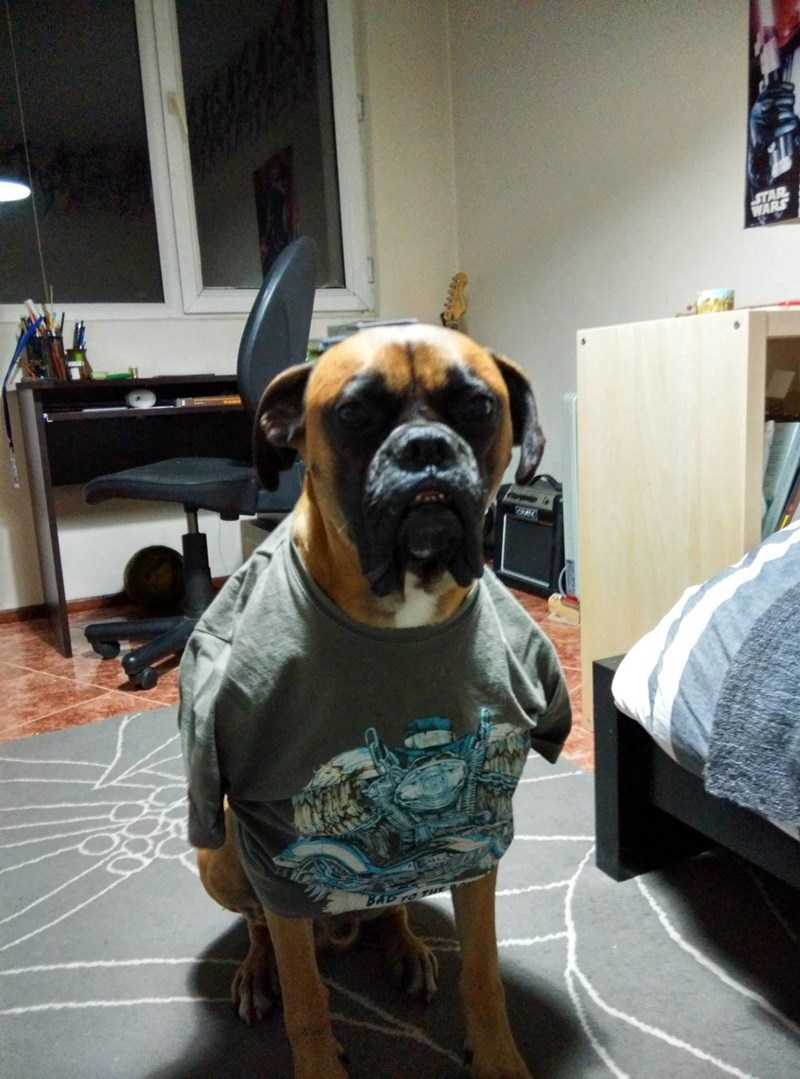 dogs shirt - 8818830080