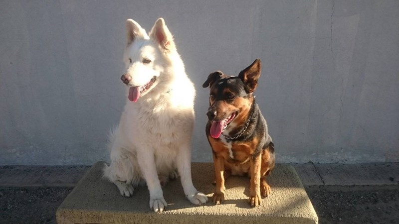 dogs - 8818830592