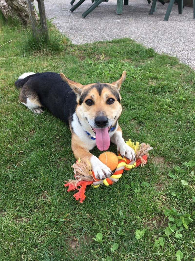 dogs toys - 8818855424
