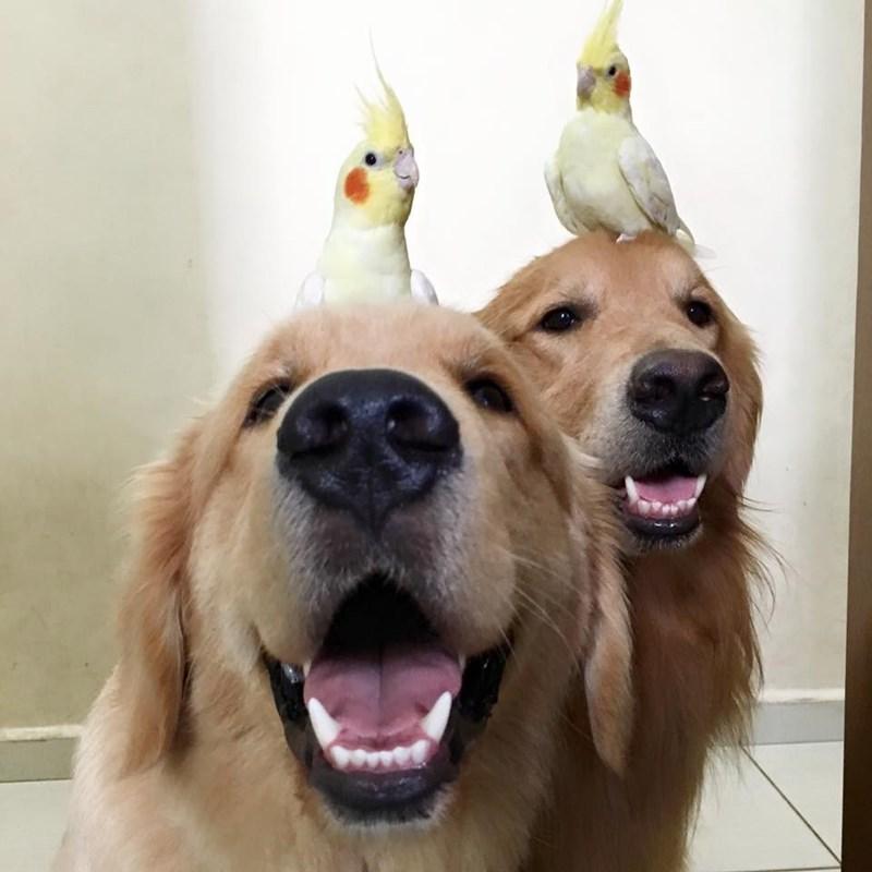 dogs,birds