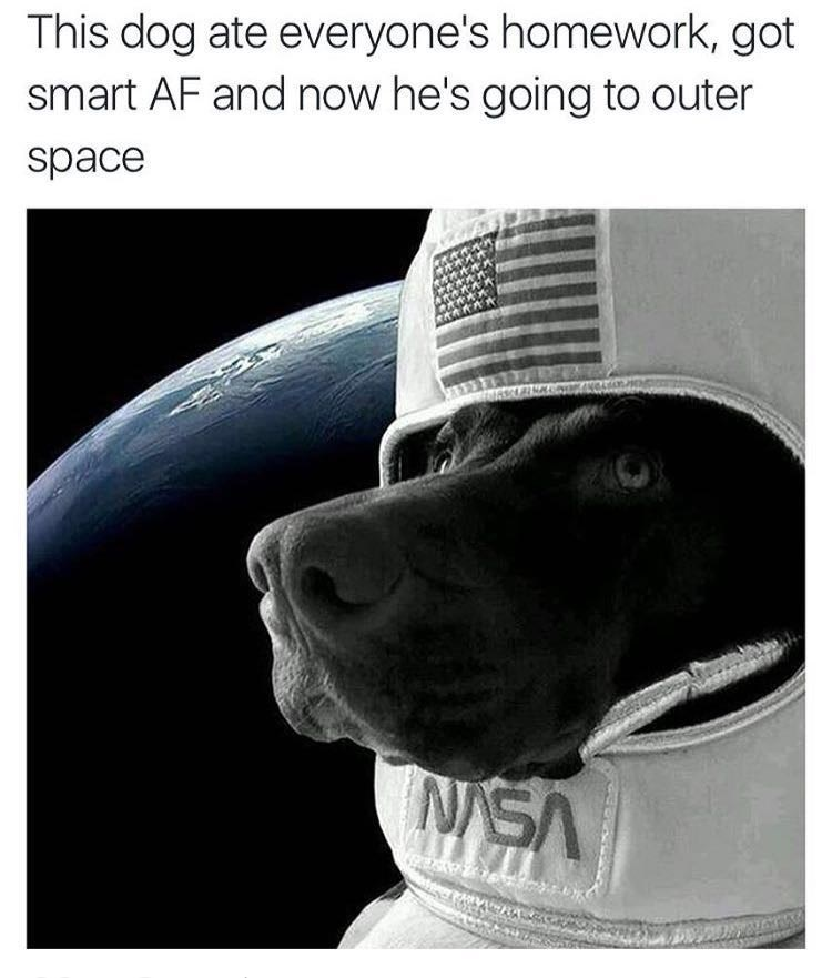 homework dogs meme funny space - 8818856448