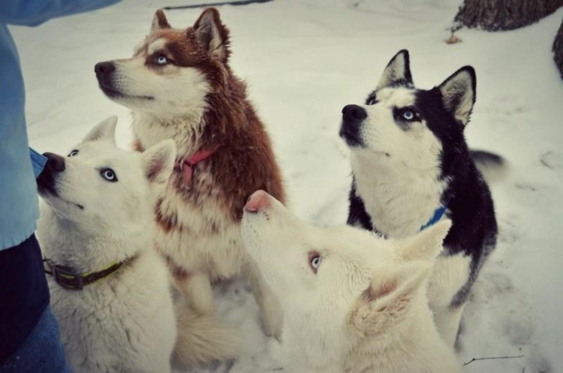 dogs snow - 8818864640