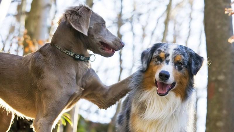 dogs friends - 8818865408