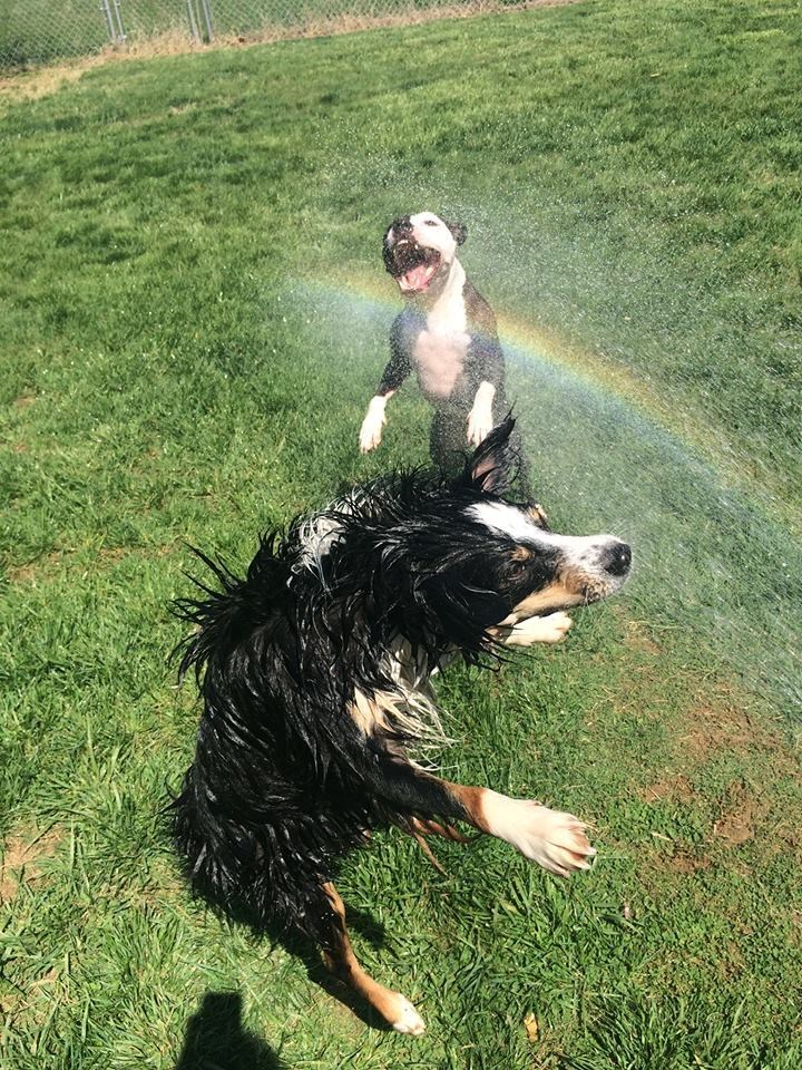 dogs water rainbow - 8818866176