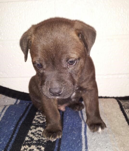dogs puppy - 8818875136