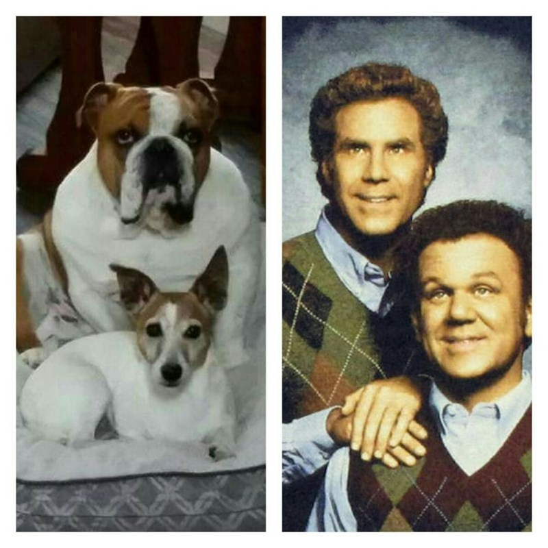 dogs step brothers - 8818875904