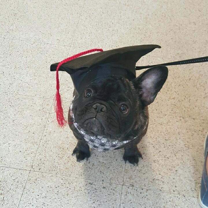 dogs graduation - 8818893824