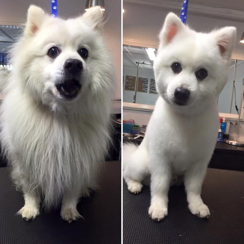 dogs haircut - 8818945536