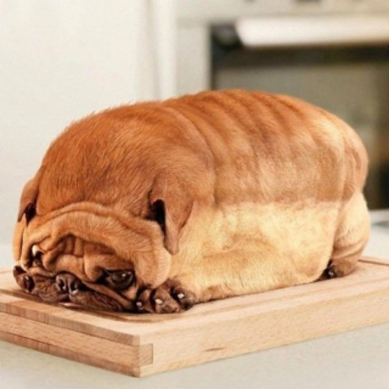 dogs,pug,bread