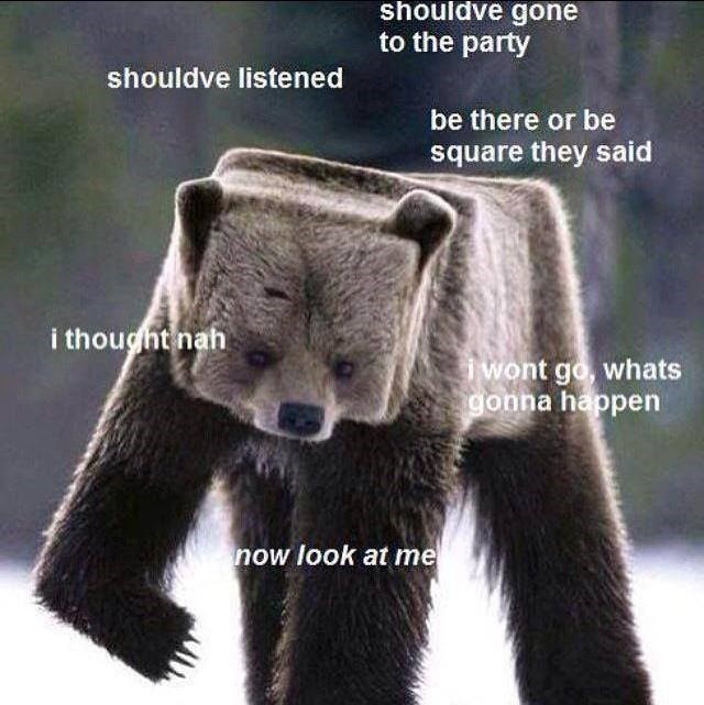 geometry Square puns bear - 8818968576