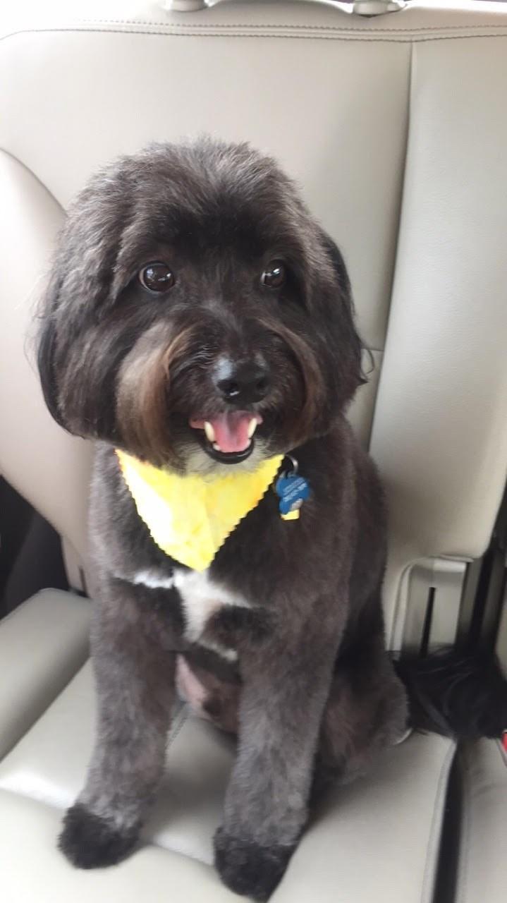 dogs haircut - 8819004416