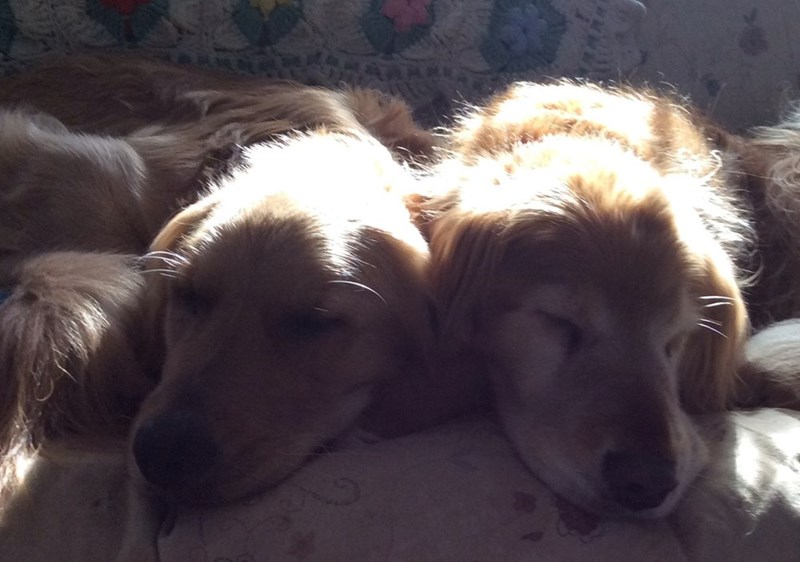 dogs - 8819015168