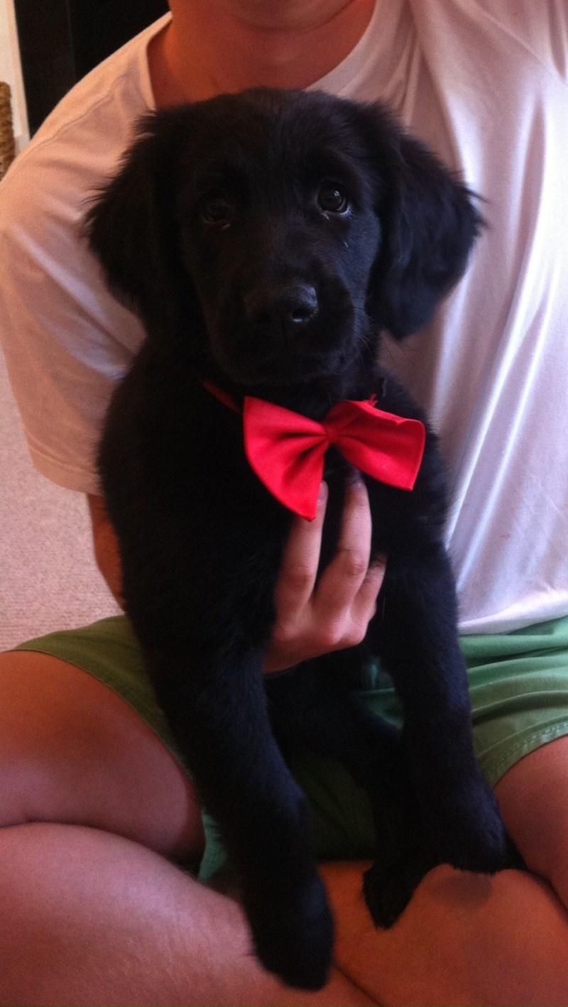 fancy dogs - 8819029248