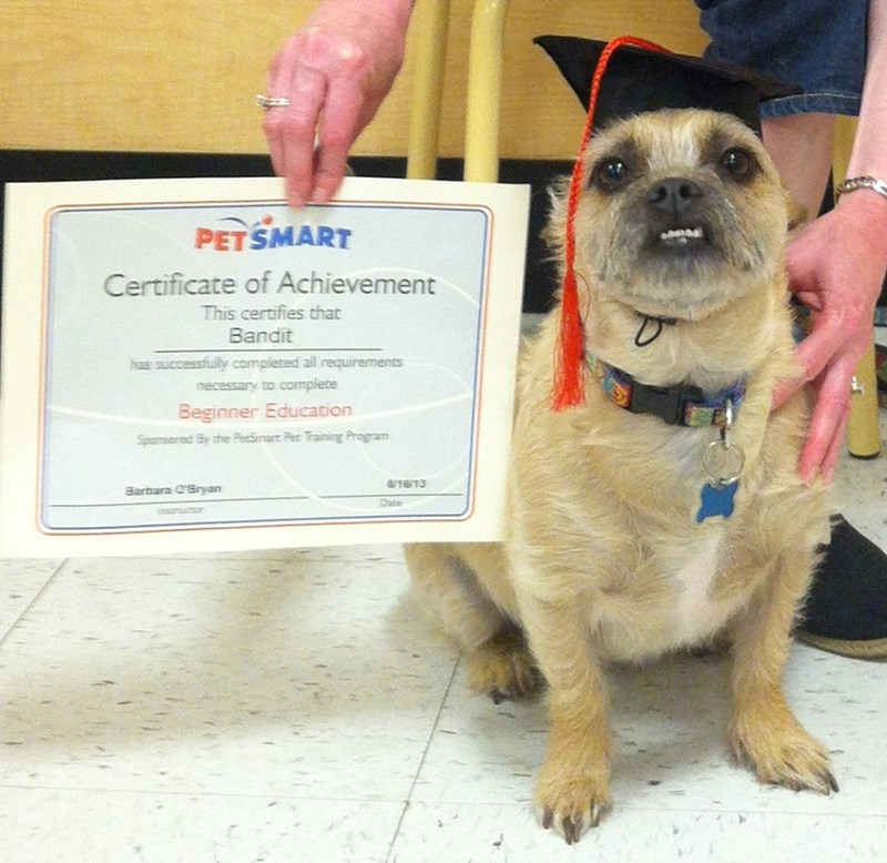 bandit dogs graduate petsmart proud - 8819069696