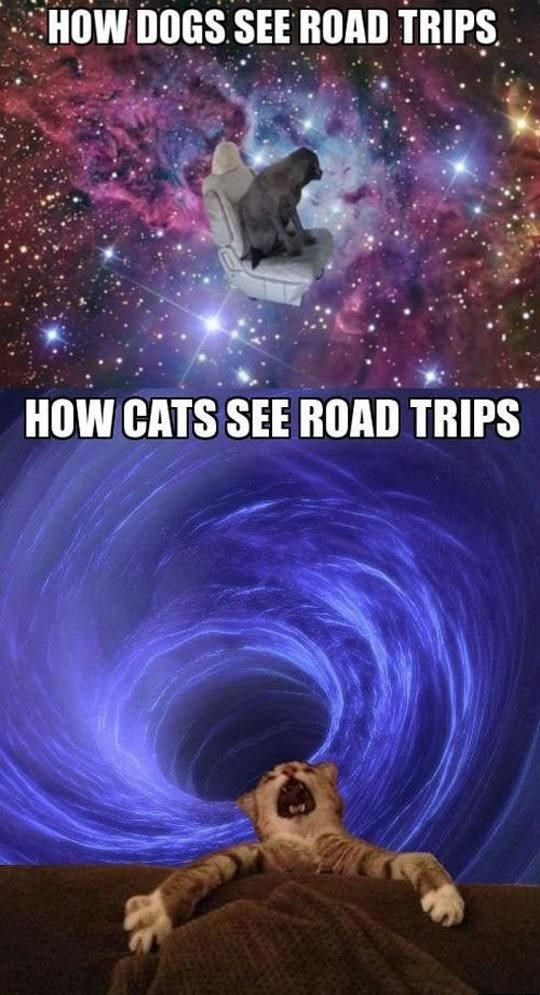 dogs road trips caption Cats space - 8819117056