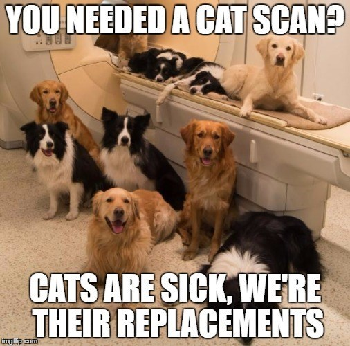 caption dogs cat scan MRI sick - 8819120384