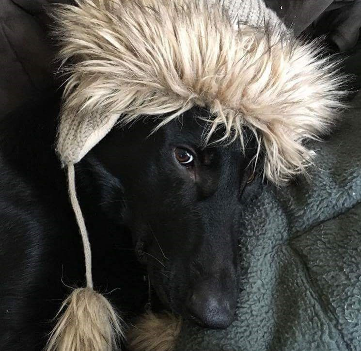 dogs hat - 8819128576