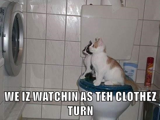 animals turn clothes as the world turns caption watching Cats - 8819134976