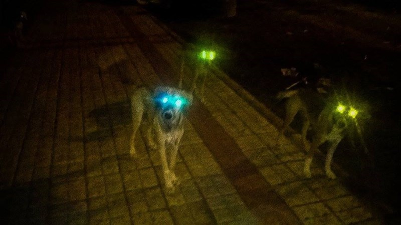 dogs,eyes,laser