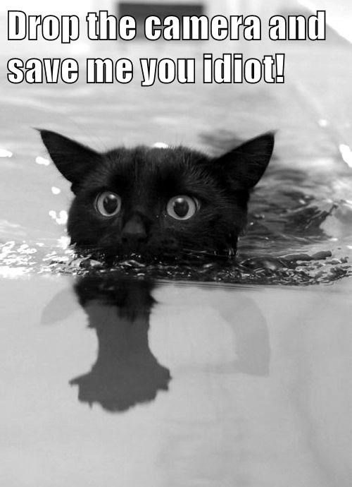 animals cat me drop save camera caption - 8819166208