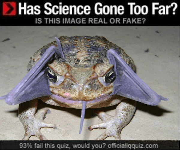 Toad - Has Science Gone Too Far? IS THIS IMAGE REAL OR FAKE? 93% fail this quiz, would you? officialiqquiz.com
