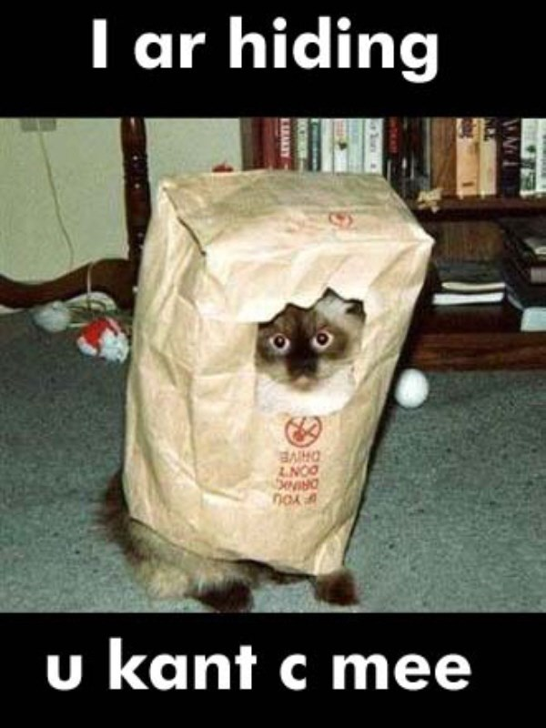 paper bag,Cats,hiding