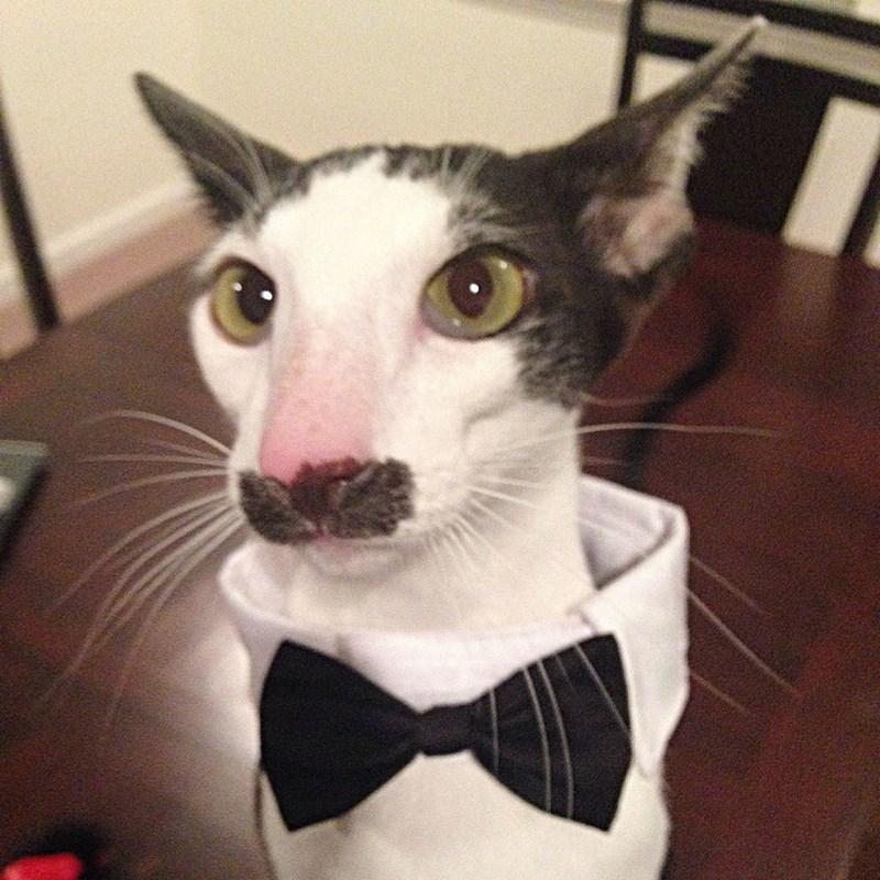 costume tux Cats - 8819181568