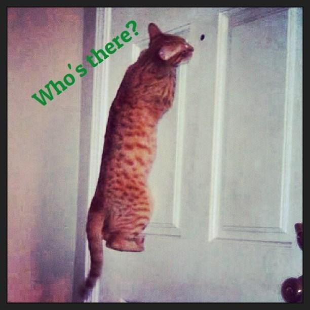 door,Cats