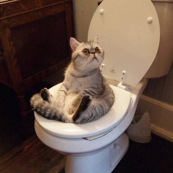 toilet Cats - 8819184384
