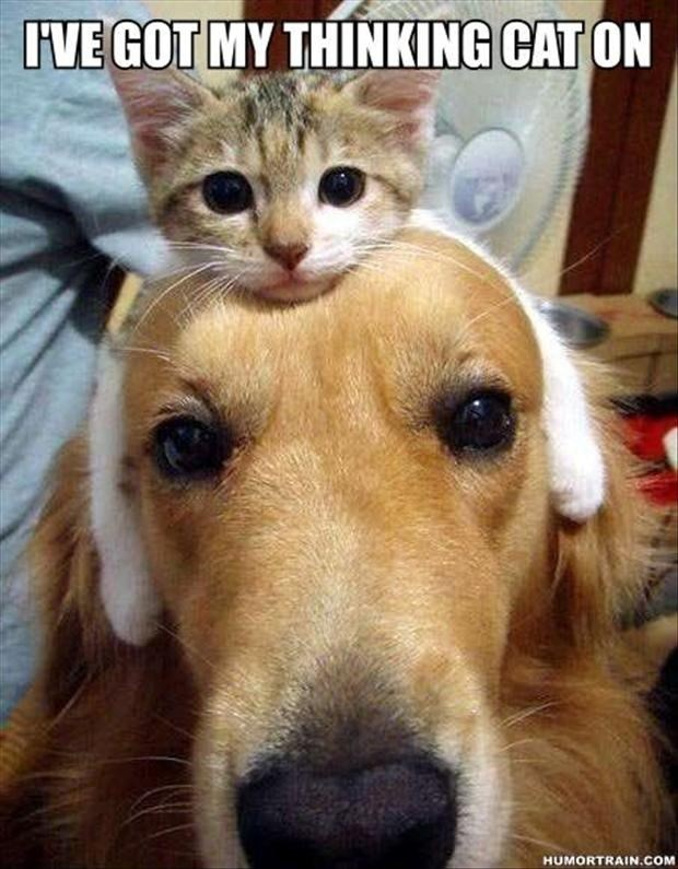 dogs thinking caption Cats hat - 8819185408