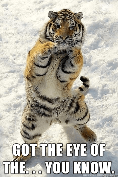 eye tiger caption - 8819185664