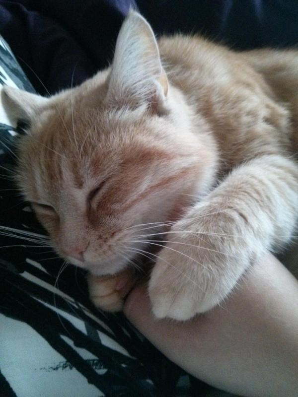 cuddle Cats - 8819186944