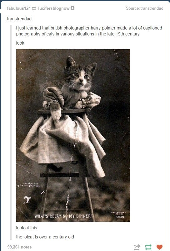 Meme of an old photograph that seems to show a cat meme in lolcat that is over hundred years old.