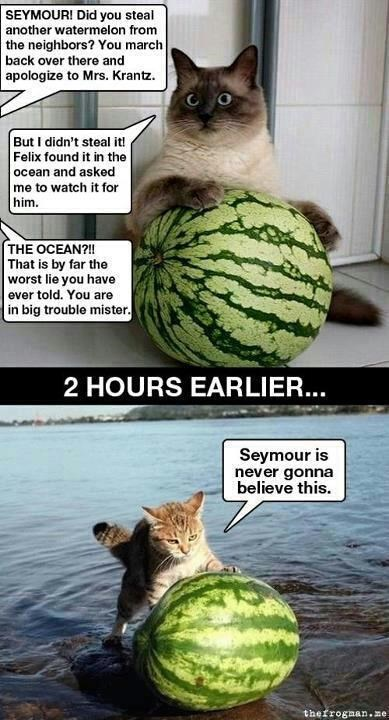 watermelon,Cats,lie