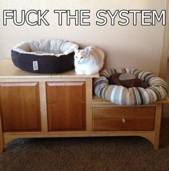 bed system rebel Cats - 8819191808
