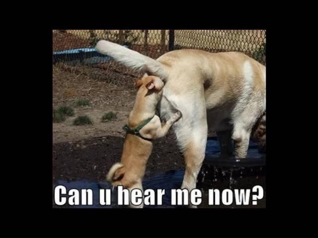 dogs hear caption