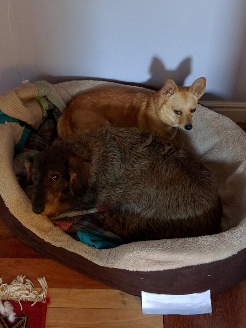 dogs bed plotting - 8819196416
