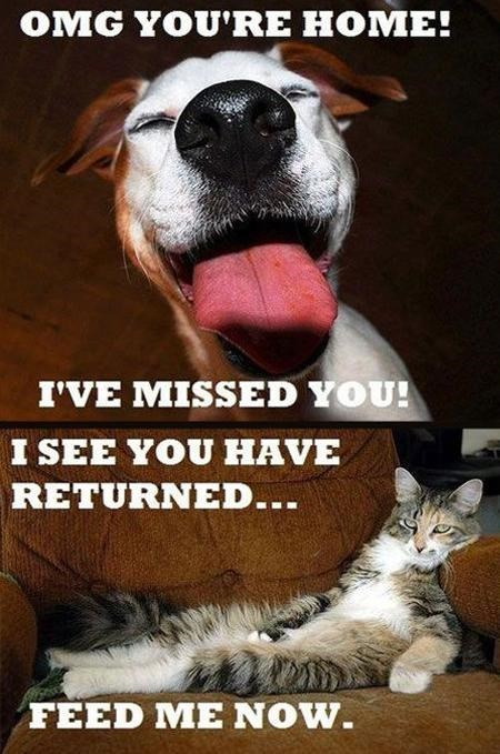 Funny meme of the difference between cats and dogs when their owner comes home at the end of the day.
