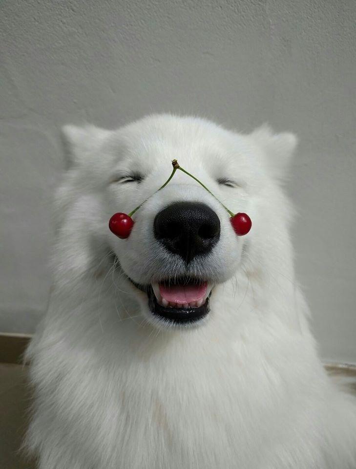 floof dogs cherries - 8819202304