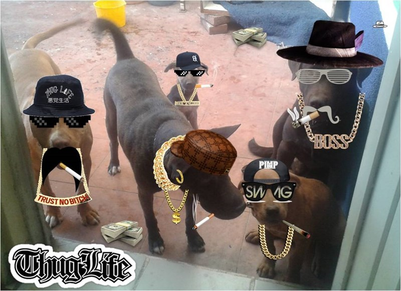 Funny pictures of 5 thug looking dogs after minor edits.