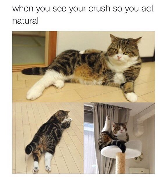 crush dating Cats - 8819208192