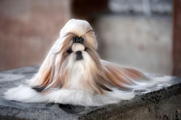 Dogs with good hair mini-dump