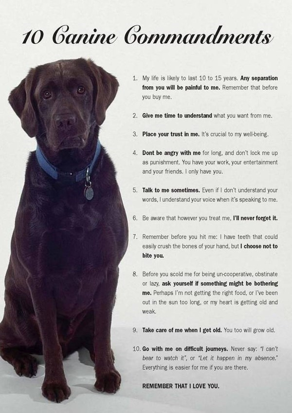 dogs commandments